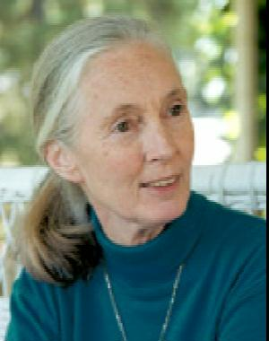 A picture of Jane Goodall